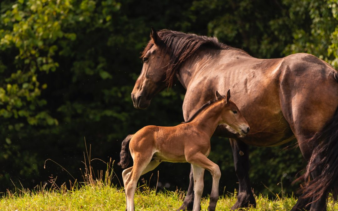 Horses Helping Troubled Families